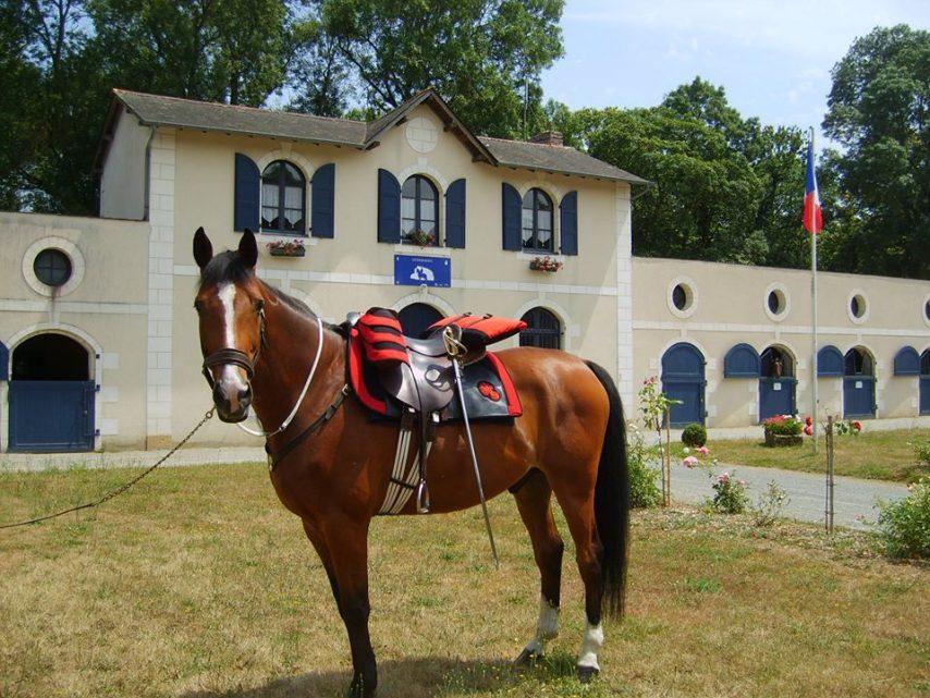 cheval-gendarme-854x641