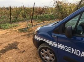 voiture-gendarmes-768x576