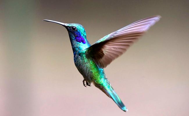 colibri-070149-650-400
