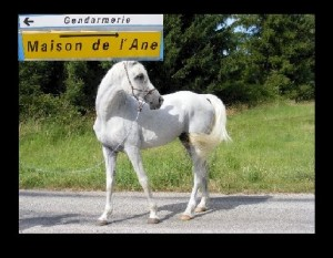 Image cheval