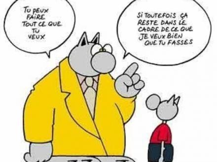 Article 11 Le chat 2