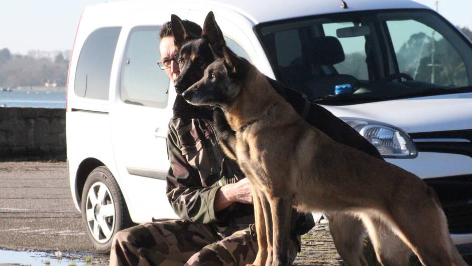 6401dc6b31ea3052108ea646d7516428-morbihan-ces-chiens-de-la-gendarmerie-qui-cherchent-defendent-et-sauvent_1