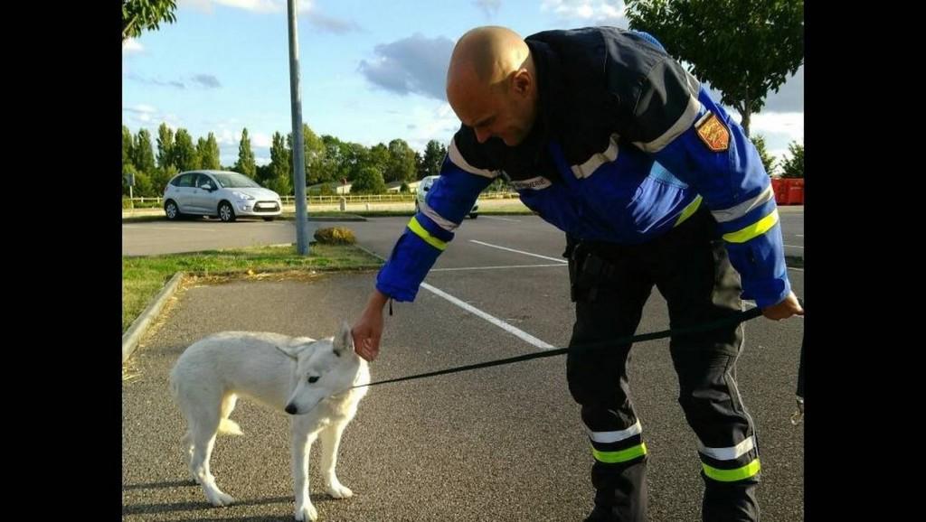 51638f7717affac62f4f597218d5a9bf-argentan-les-gendarmes-sauvent-un-chien-pendant-un-controle