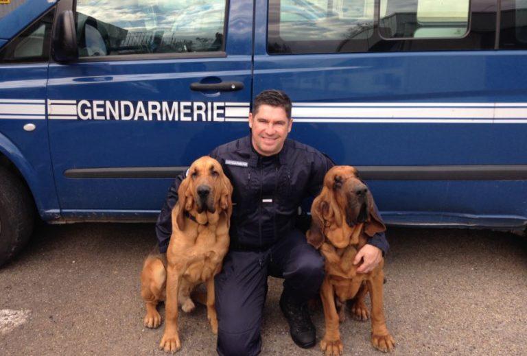 chiens-gendarmerie-768x519