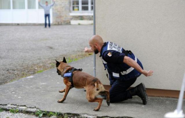 640x410_un-gendarme-et-son-chien-lors-d-un-exercice-au-centre-national-d-instruction-cynophile-de-la-gendarmerie-a-gramat-le-12-mai-2016
