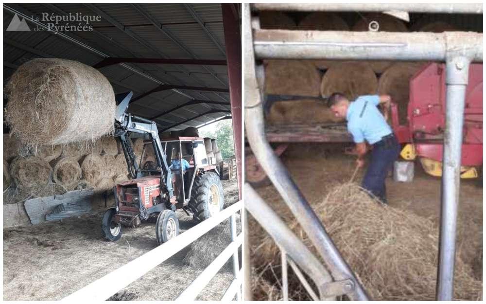 scene-insolite-les-gendarmes-ont-assiste-l-agriculteur-verbalise-et-convoque-en-justice-pour-nourrir-ses-betes