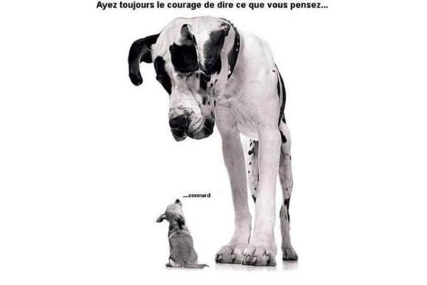 liberte-expression-chien21