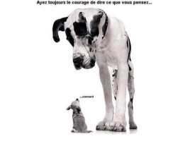 liberte-expression-chien2